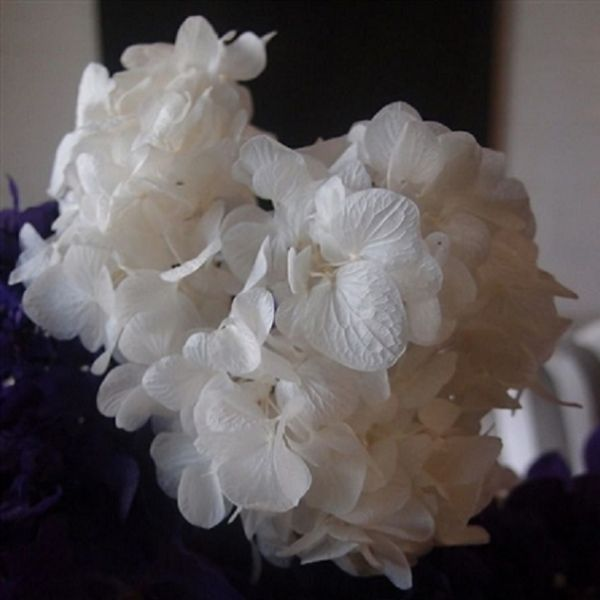 37702128 –  BLEACHED PRESERVED HYDRANGEA, PKG/3