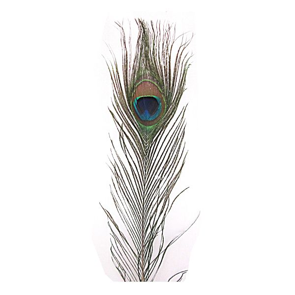 132277- PEACOCK FEATHER 30″ – 35″ 10/PKG (32823001)