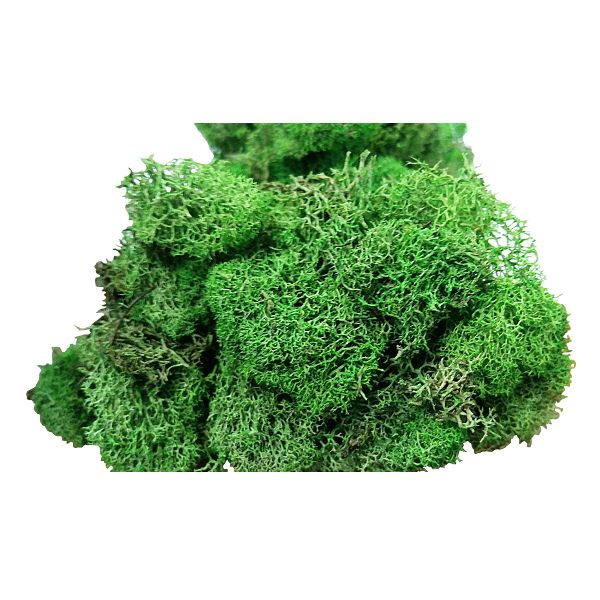 34109918  – DRIED SPRING GREEN REINDEER MOSS 4 OZ