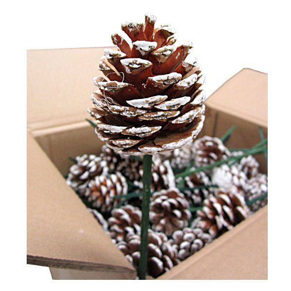 981911-   XM PICK PINECONE FROSTED 6+STICK 2.5 CS/100